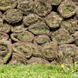 Rolled grass — Stock Photo #9067942