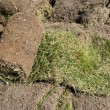 Stock Photo: Rolled grass