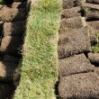 Rolled grass - Stock Photo