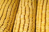 玉米芯 — 图库照片