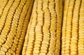 Corn cob — Stockfoto