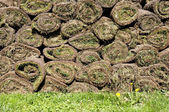 Rolled grass — Stock Photo