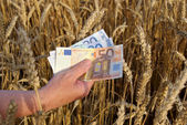 Wheat and money — Stock Photo