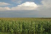 сельское хозяйство — Стоковое фото