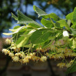 Tree flower — Stockfoto #9151651