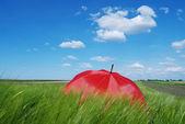 Umbrella in field — Stock Photo