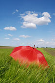 Umbrella in field — Stock Photo