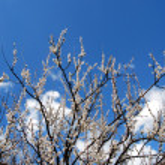 Spring — Stock Photo #9181437