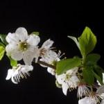 Spring — Stock Photo #9181875