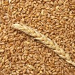 Wheat concept — Stock Photo #9188341