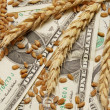 Wheat and money concept - Foto de Stock