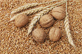 Wheat and nuts — Stock Photo
