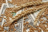 Wheat and money concept — Stock Photo
