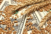 Wheat and money concept — Fotografia Stock