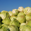 Heap of cabbage — Stock Photo