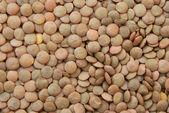Lentil vegetable — Stock Photo