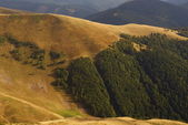 Virgin forest in Carpathians — Stock Photo