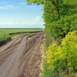Stock Photo: Road between field and forest