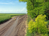 Road between the field and forest — Stock Photo