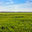 Steppe grass — Stock Photo