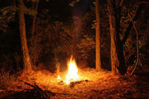 Bonfire in the woods — Stock Photo