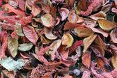 Hromadu suchého listí — Stock fotografie