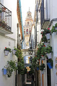 Flower Alley in Cordoba — Stock Photo