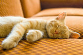 The sleeping cat — Stock Photo