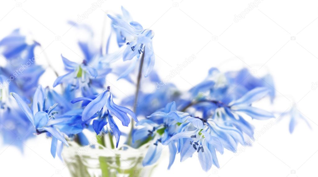 Floral background of first spring blue flowers close up — Stock Photo #10551632