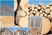 A collage of different types of wood piles, save of natural envi — Stock Photo