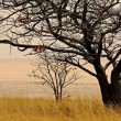 Acacia tree in Etosha pan — Foto Stock