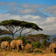 Elephant family in front of Mt. Kilimanjaro, kenya — Stock Photo #8902844
