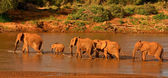Elephant family crossing river — Stock Photo
