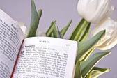 Easter Bible Verse and Tulips — Stock Photo