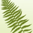 Stock Vector: Fern Frond