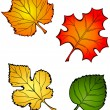 Four Fall Leaves — Stock Vector