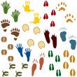 Fourteen Sets of Animal Tracks - Imagens vectoriais em stock