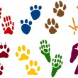 Royalty-Free Stock Vector Image: Eight sets of Animal Tracks