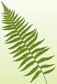 Fern Frond — Stock Vector