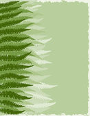 Fern Fronds Background — Stock Vector