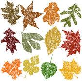Twelve Grunge Leaves — Stock Vector