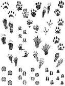 Grunge Animal Tracks — Stock Vector