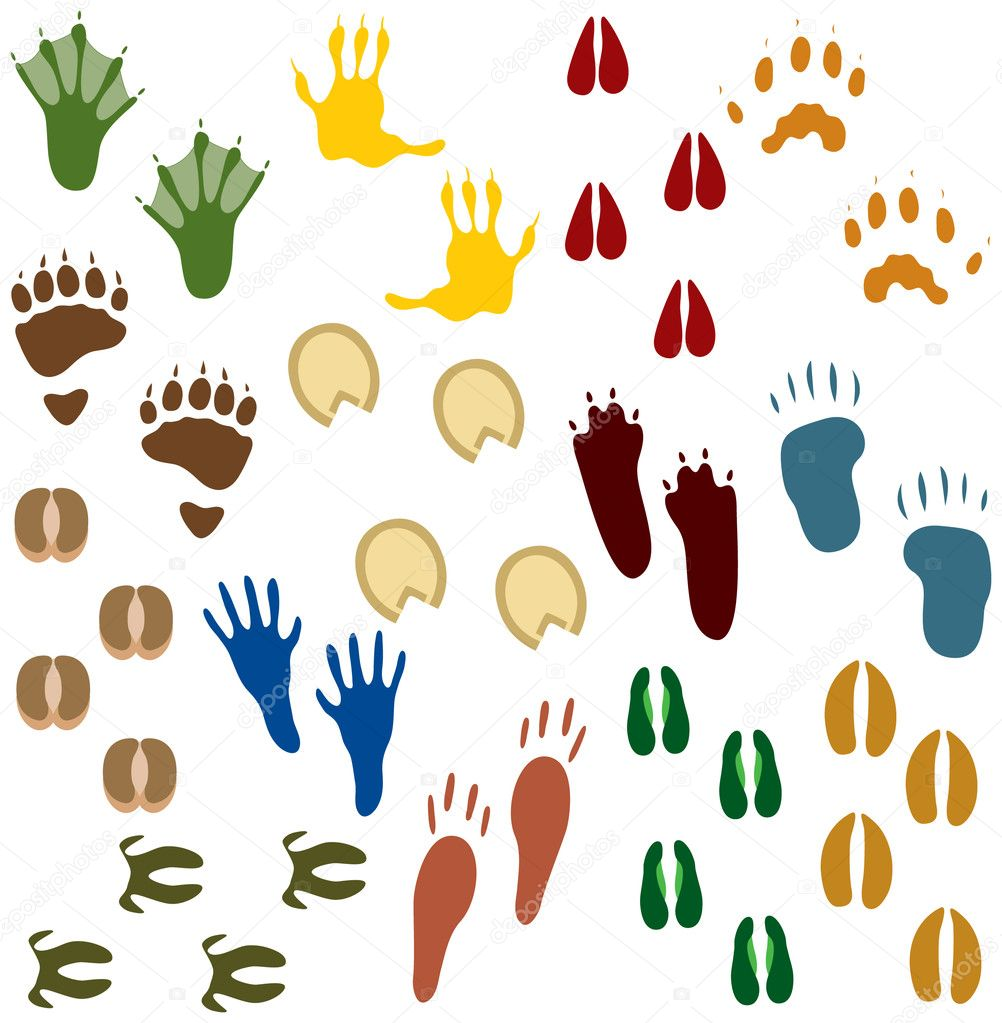 Sets of Animal Tracks — Stock Vector #8996636