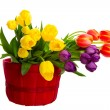 Colorful Cut Tulips — Foto Stock