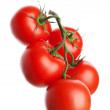 Tomatoes on the Vine — Foto Stock