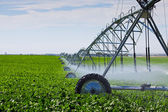 Irrigatie pivot — Stockfoto