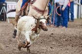 Calf Roping — Stock Photo