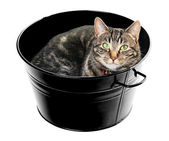 Tub Full of Tabby — Stock Photo