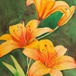 Tiger Lilies — Stock Photo