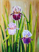 Irises — Stock Photo